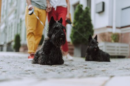 Man and woman standing with their dogs outdoors