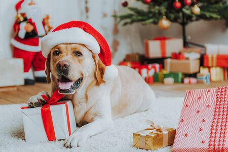Cute dog in red Christmas hat on floor Archivio Fotografico