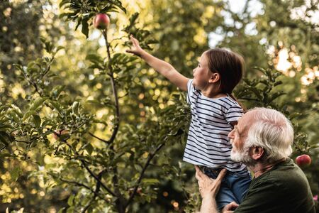 Grandfather holding his granddaughter picking apple from tree 免版税图像