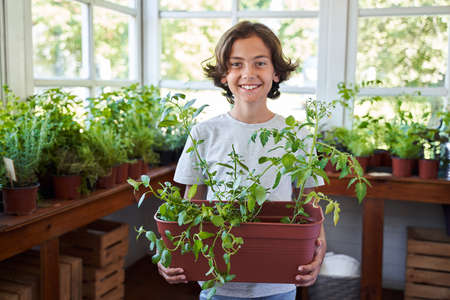 Cheerful boy with houseplant standing in orangery