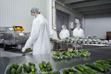 Experienced male worker packing vegetables using machinery Standard-Bild