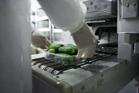 Skilled employee in uniform packing fresh cucumbers