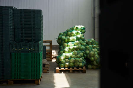 Fresh vegetables piled up at a storage facility