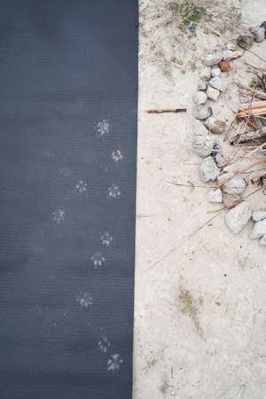 Puppy footprints on the mat