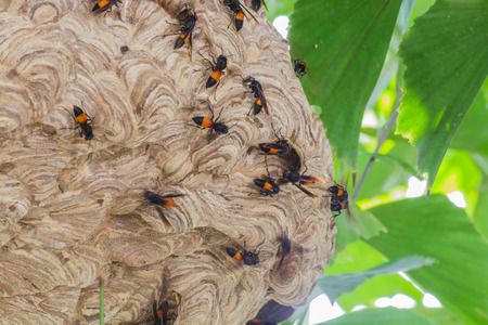 wasp nest on the tree close up photo