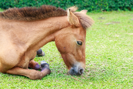 arrodillarse: arrodillarse caballo
