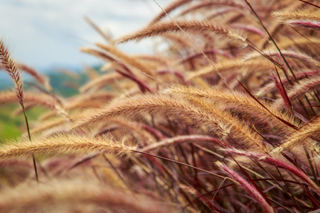 brown: brown grass field