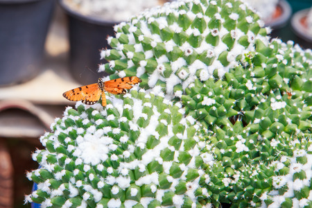 to thrive: butterfly on cactus Stock Photo