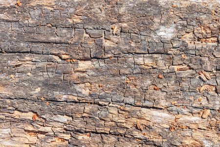 bark peeling from tree: old wood logs texture background Stock Photo