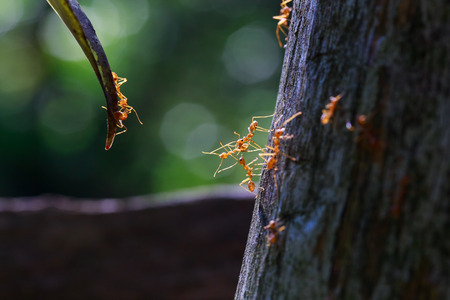 ant leaf: close up of ants unity reaching each other
