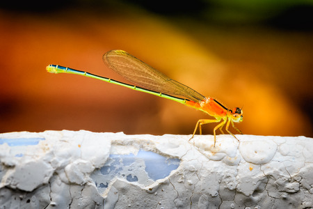 close up: Close up Colorful dragonfly
