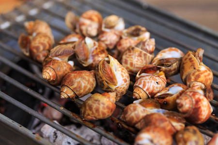 Grilled spotted babylon on Charcoal stove Stock Photo