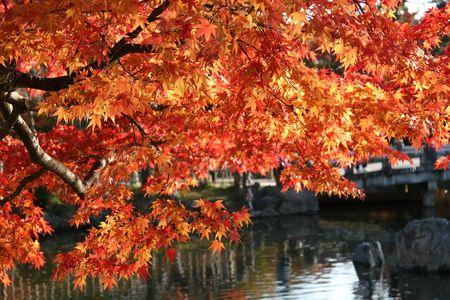日本の京都で池の上の太陽に照らされた葉