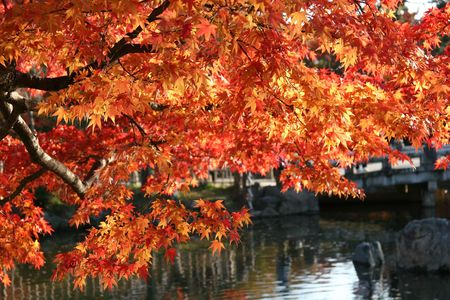 Sunlit leaves over a pond in Kyoto, Japan photo