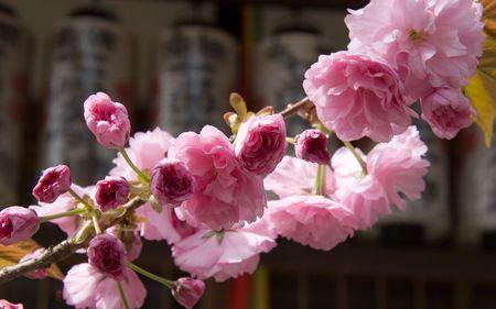 京都、日本の漢字で梅の花灯籠の前に覆われています。