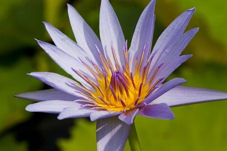 京都日本庭園のエキゾチックな花。