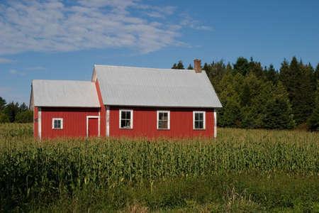 school house: Una vieja casa de la escuela rojo rodeado por un campo de ma�z - paisaje.
