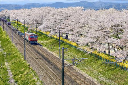 Japan - April 12, 2016 : The Logistic train run along the railway to Funaoka Station beside with Thousands Sakura Trees, Sendai Редакционное