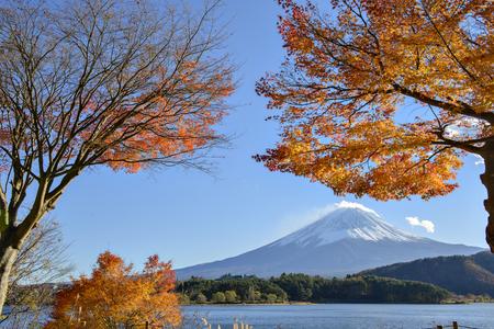 Fuji-san and Maple trees at kawaguchiko Lake, Yamanashi, Japan
