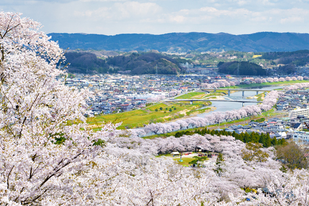 Ciudad de Funaoka con miles de árboles de Sakura a lo largo del río Shiroishi en primavera Foto de archivo - 76850518