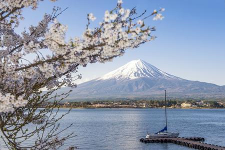 momiji: Fuji Mountain and Sakura Branches at Kawaguchi Lake Stock Photo