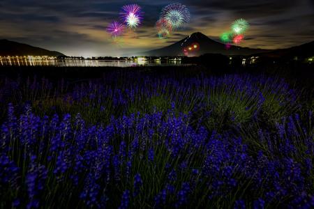 Fuji Mountain and Lavender Field with Firework Festival at Oishi Park, Kawaguchiko, Japan Фото со стока