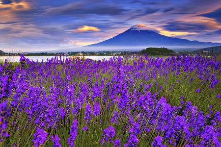 Montaña de Fuji y jardín de la lavanda con el cielo colorido en el tiempo de la puesta del sol, parque de Oishi, Kawaguchiko, Japón