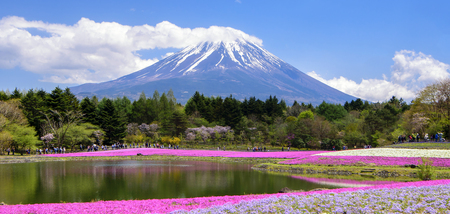 Fuji Mountain and Shibazakura Field, Japan Stock Photo