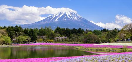 Fuji Mountain en Shibazakura Field, Japan Stockfoto