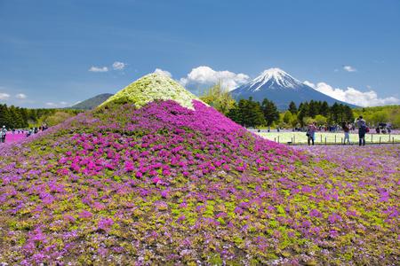 Fuji Mountain and Shibazakura Garden at Shizuoka, Japan