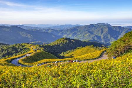 Mexican Sunflower Field on the Mae U-ko Hill, Mae Hong Son, Thailand Фото со стока
