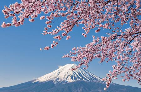 Fuji Mountain and Pink Sakura Branches with Blue Sky at Kawaguchiko, Japan in Spring