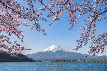 Montaña Fuji y ramas de Sakura rosa en el lago Kawaguchiko, Japón