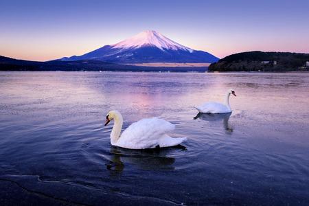 Fuji Mountain and Two Swans at Yamanakako Lake in Morning, Japan