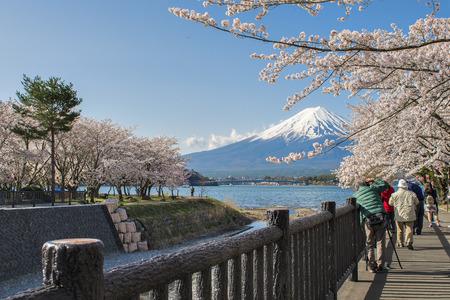 Fuji Mountain and Sakura Festival at Kawaguchiko Lake, Japan