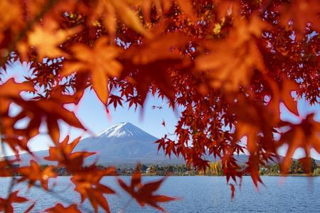 Fuji Mountain and Red Maple Leaves Frame at Kawaguchiko Lake, Japan