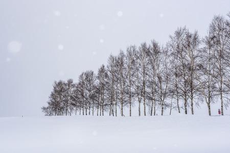 Seven Stars Tree of Biei Patchwork Road in Winter, Hokkaido, Japan Фото со стока