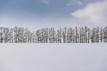 Mild Seven Hills in Winter, Biei, Hokkaido, japan