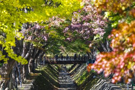 Momiji Corridors at Kawaguchiko Lake, Japan