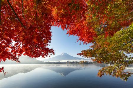 Fuji Mountain Reflection with Morning Mist and Red Maple Leaves at Kawaguchiko Lake, Japan Фото со стока