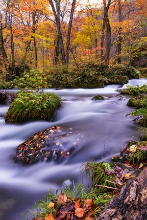 Oirase Stream in Autumn, Towada Lake, Aomori, Japan