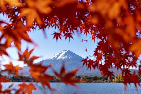 Fuji Mountain in Autumn Red Maple Leaves Frame, Kawaguchiko Lake, Japan
