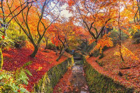 Colourful Maple Trees in garde of Tofukuji Temple, Kyoto, Japan Foto de archivo