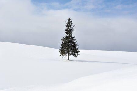 Alone Famous Christmas Tree on Snow Hill in Winter Clear Sky Day , Biei Patchwork Road, Biei, Hokkaido, Japan Foto de archivo