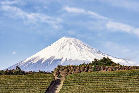 Fuji Mountain and Green Tea Plantation at Fujinomiya, Shizuoka, Japan Foto de archivo