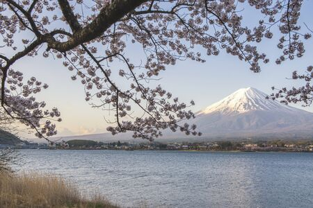 Fuji Mountain and Pink Sakura Branches at Kawaguchiko Lake Foto de archivo