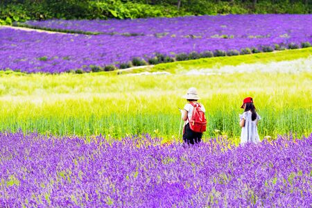 Woman and Child Tourists enjoy sightseeing Colourful Flower and Lavender Field at Tomita Farm in Summer, furano, Hokkaido, Japan