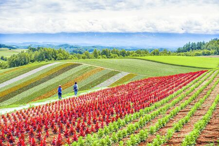 Tourists enjoy sightseeing colourful flower garden in summer at Shikisai No Oka Flower Garden, Biei, Hokkaido