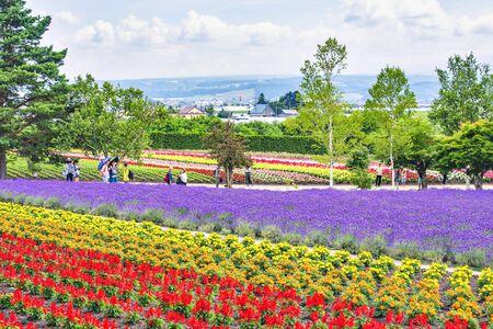 tourists enjoy sightseeing colourful flower garden and lavender field in summer at Tomita Farm, Furano, Hokkaido Foto de archivo