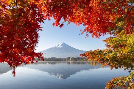 Fuji Mountain Reflection with Red Maple Leaves in Autumn, Kawaguchiko Lake, Japan Foto de archivo